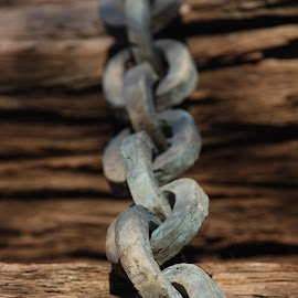 Tired chain by Aaron Thibodeau - Novices Only Objects & Still Life ( old, wood, metal, chain, california, trees, logging, rust )