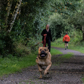 I'm coming daddy by Richard Ashton - Animals - Dogs Running