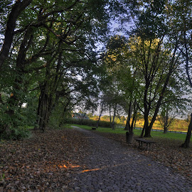 Autumn in the park by Zeljko Kliska - City,  Street & Park  City Parks ( nature, park, autumn, zagreb, city )