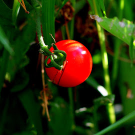 by Donald Darneille - Nature Up Close Gardens & Produce ( red, green )