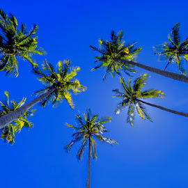 Coconut Trees by Indrawaty Arifin - Nature Up Close Trees & Bushes ( nature, coconut, trees )