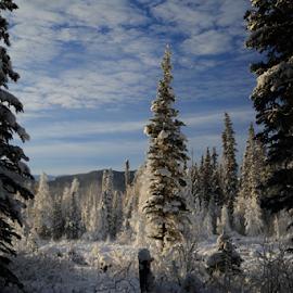 Winter Day by Darlene Wuenschel - Landscapes Mountains & Hills (  )