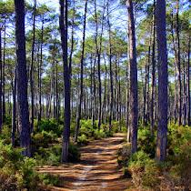 Mata Nacional de Leiria' Biodiversity   (Portugal)