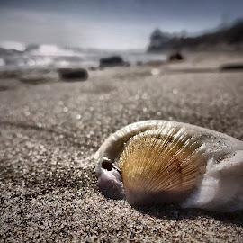 Sea Fossil by Chris Coggin - Landscapes Beaches (  )
