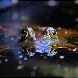Pond Buddy by Dennis Ba - Animals Amphibians