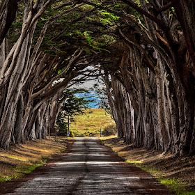 Arc of Trees.jpg