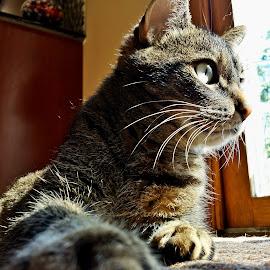 by Marta Raczkowska-Radkiewicz - Instagram & Mobile Android ( cat )