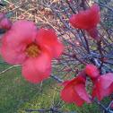 February flower