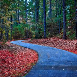 Mazarick Park Trail by Carol Plummer - City,  Street & Park  City Parks ( nature, park, autumn, trail, city,  )
