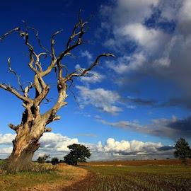 *** by Zanna Zaka - Landscapes Prairies, Meadows & Fields ( england, tree, weather, summer, rain )