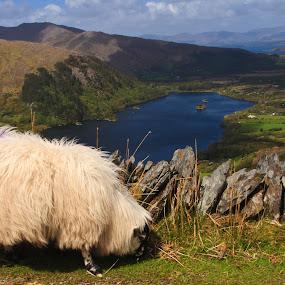 Healy Pass by Peter Andrusyszyn - Landscapes Mountains & Hills ( photo by pete andrusyszyn, ireland trip, healy pass, beara penninsula )