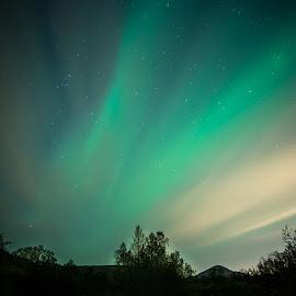 Night lines by Dan Steinbakk - Landscapes Mountains & Hills ( hills, aurora borealis, forest, arctic, river, norway )