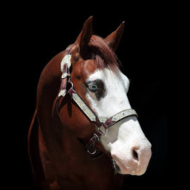 Paint horse by Alessandra Cassola - Animals Horses ( #paint horse, #horses, #horse, #animal )