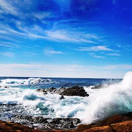 Monterey by Eileen Carp - Landscapes Beaches (  )
