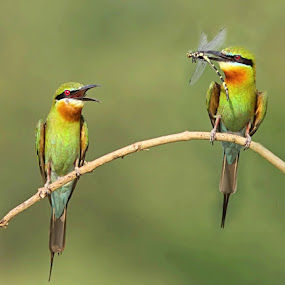 by Prasanna Bhat - Animals Birds (  )