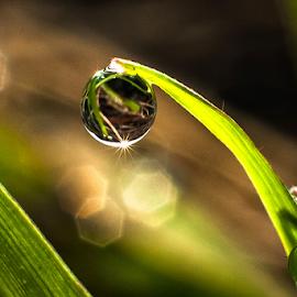 the one by Kawan Santoso - Nature Up Close Natural Waterdrops