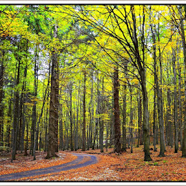 autumn by Jojo Pried-Horsky - Landscapes Forests ( nature, color, autumn, way, slovakia, pružina,  )