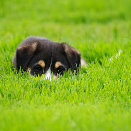 You Can't See Me by Catherine Trudeau - Animals - Dogs Puppies