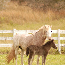 I Love You Mom by Donna Cole - Animals Horses