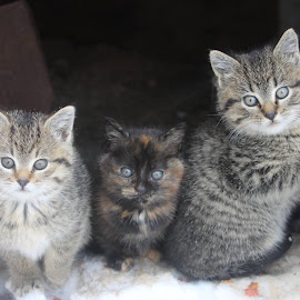 Wut by Naia Eggert - Animals - Cats Kittens ( kittens snow cute perfect adorable )