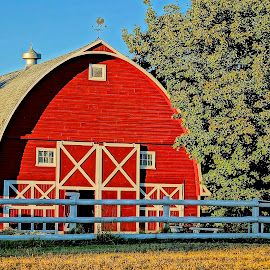 Red Barn Beauty by Barbara Brock - Buildings & Architecture Other Exteriors ( farm, red barn, pretty barn )