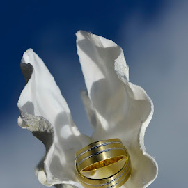 wedding rings by Alah Ja Ja Bin - Artistic Objects Jewelry ( mirror, reflection, blue, rings, wedding rings, gold, photography )