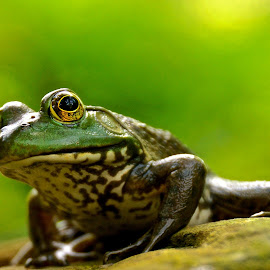 IT'S EASY BE GREEN!!! by Michael Crawley - Animals Amphibians