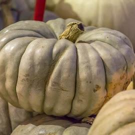 Pumpkin Patch  by Leah N - Food & Drink Fruits & Vegetables