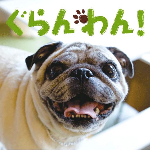 シニア犬・老犬と楽しく暮らすペットマガジン「ぐらんわん!」 新聞 App LOGO-APP試玩