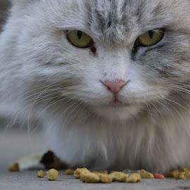 by Jason Kwong - Animals - Cats Kittens