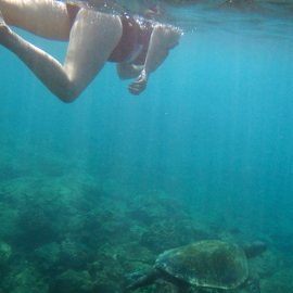 by Keith Sutherland - Sports & Fitness Swimming ( underwater, sea turtle, woman, swimming )