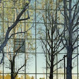 by Liz Rosas - Buildings & Architecture Office Buildings & Hotels ( vertical lines, pwc )