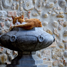 by Stefano Uberti - Animals - Cats Kittens
