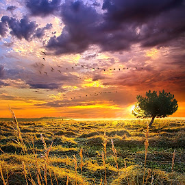 Every Story Has A Beginning by Phil Koch - Landscapes Prairies, Meadows & Fields ( vertical, photograph, fine art, yellow, travel, leaves, love, sky, nature, tree, autumn, light, flower, orange, twilight, agriculture, horizon, portrait, dawn, serene, outdoors, trees, floral, natural light, wisconsin, ray, landscape, phil koch, sun, photography, flying, blue sky, path, horizons, office, clouds, park, green, back light, scenic, morning, shadows, wild flowers, field, flight, red, blue, color, sunset, peace, fall, meadow, landscapephotography, beam, sunrise, geese, landscapes, hike, mist,  )