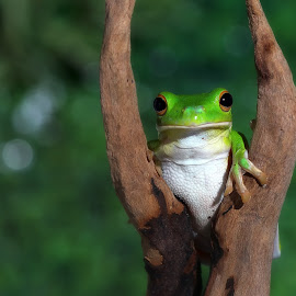 see something by Kurito Afsheen - Animals Amphibians