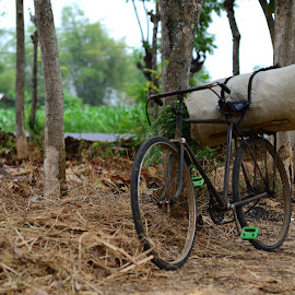 Sepeda Kumbang by Taufan F Adryan - Transportation Bicycles
