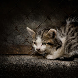 Alone by Илияна Лазарова - Animals - Cats Kittens ( kitten, street kitten, cute kitten, alone kitten, alone, baby, young, animal )