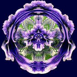 Beauty in Blue by Tina Dare - Digital Art Abstract ( abstract, patterns, purple, designs, medallion, distorted, blue background, royal blue, solid background, blues, shapes )