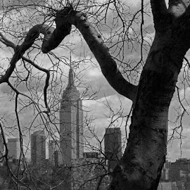 Empire State by Linda Antenucci - City,  Street & Park  Skylines (  )