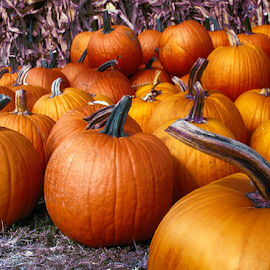 Pumpkin Time of The Year by Donna Neal - Food & Drink Fruits & Vegetables ( fall, color, colorful, nature )