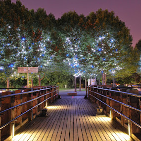 Magic Trees by Alessandro Pinto - City,  Street & Park  Neighborhoods ( night photographt, london, street, southbank, pier, trees )