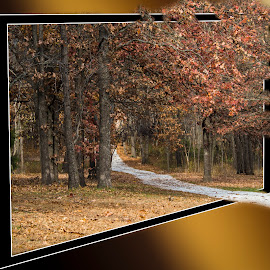 Trip in the woods by Esther Lane - Digital Art Places ( out of bounds, wood, autumn, walling path, photo,  )