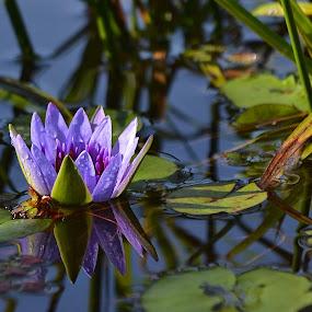 by Margie MacPherson - Flowers Single Flower (  )