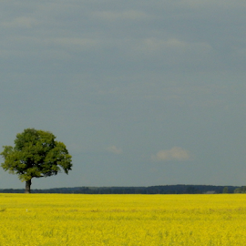 In the yellow by Laimonas Šepetys - Landscapes Prairies, Meadows & Fields