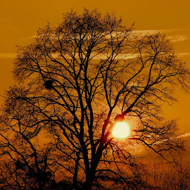 by John King - Nature Up Close Trees & Bushes