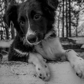 by Danielle Mettling - Animals - Dogs Portraits