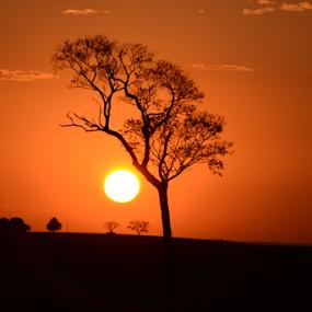 Itapura SP by Marcello Toldi - Landscapes Sunsets & Sunrises (  )