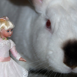 Miniature Doll by Marie Terry - Artistic Objects Toys ( rabbit, doll, alice in wonderland, doll and rabbit, miniature doll, white rabbit )