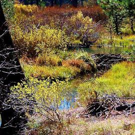 by Samantha Linn - Landscapes Prairies, Meadows & Fields