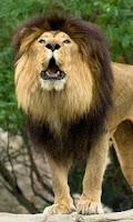 Screenshot of ZooShaker Animal Kid Education